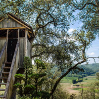 Auction off a custom-built treehouse!